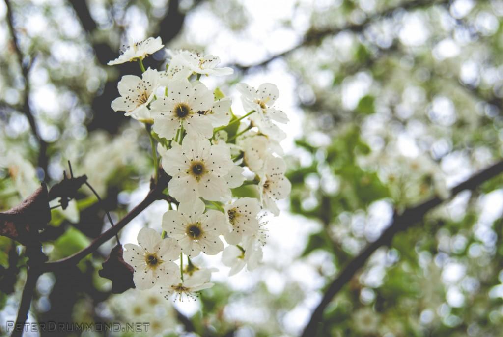 Redding Spring